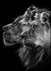 Bildverkstad Lion and lioness portrait Poster