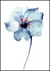 Lagervaror egen produktion Aquarelle Flower - Blue Poster