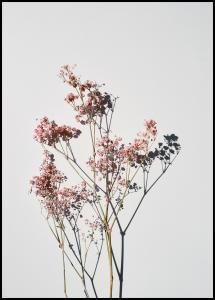 Bildverkstad Dried flowers II Poster
