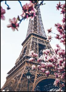 Lagervaror egen produktion Eiffel Tower Blossoms Poster