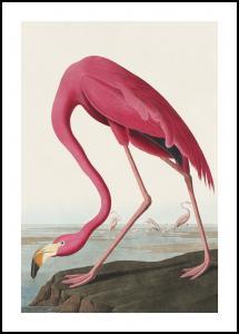 Lagervaror egen produktion American Flamingo