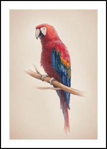Lagervaror egen produktion Tropical Parrot