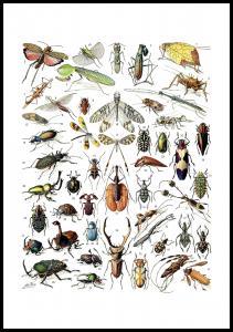 Lagervaror egen produktion Insects chart II Poster