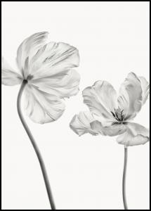 Bildverkstad Same tulip front and backview Poster