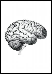 Bildverkstad Parts of the brain chart Poster