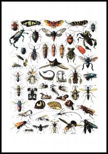Lagervaror egen produktion Insects chart I Poster