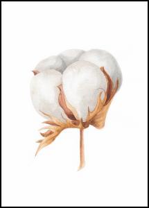 Bildverkstad Cotton Flower Poster