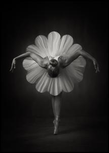 Bildverkstad Floral Ballet Poster